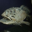 fish skeleton photoshop contest